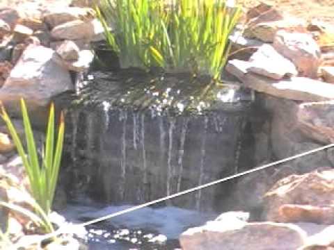 Nevada Koi Pond Youtube