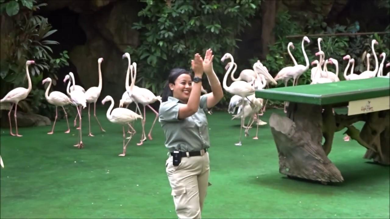 Jurong Bird Park Singapore Variety Of Birds Show