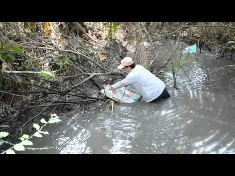 Bắt cá Tai Tượng