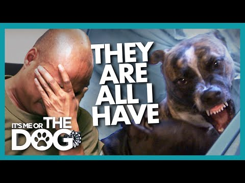 Overwhelmed Dog Rescuer Needs Saving from his Pitbulls   It's Me or The Dog