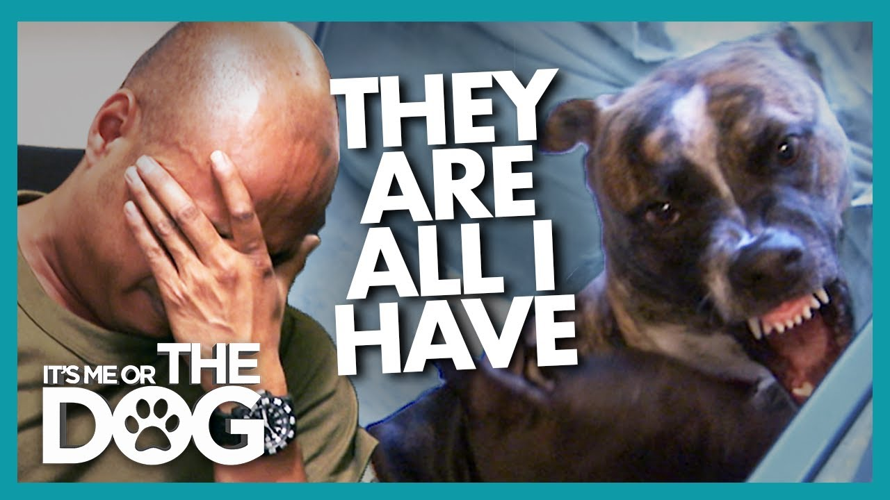 Overwhelmed Dog Rescuer Needs Saving from his Pitbulls | It's Me or The Dog