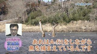 茨城県亜仁村では、村民全員がユニークな慣習を取り入れていた! それは...