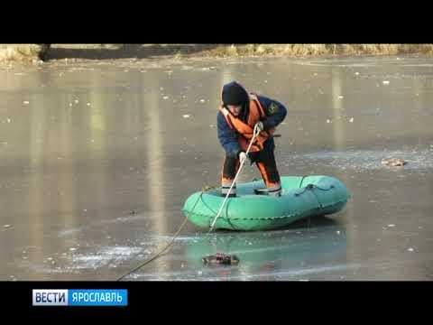Видео В Ярославле сотрудники ЦГЗ прибыли на помощь уткам