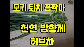 모기퇴치 식물 허브차 천연방향제 주택정원 레몬그라스 키…