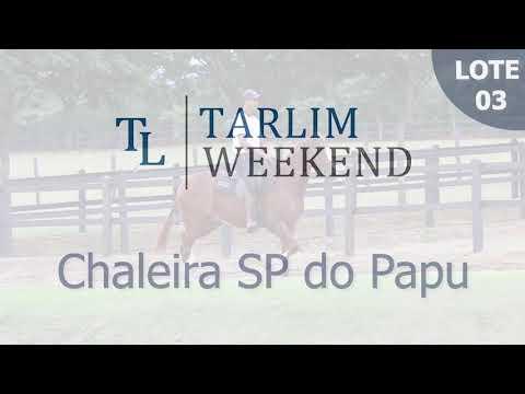 Lote 03 - Chaleira SP do Papu (6º Leilão Tarlim)