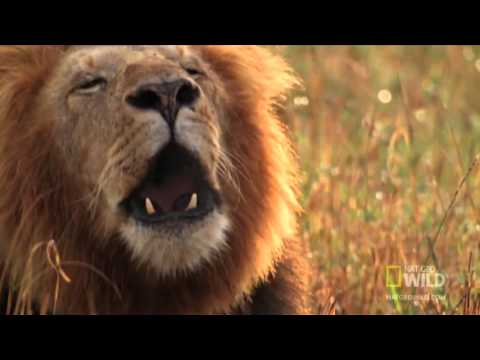 Top 10 Deadliest African Animals