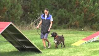 Texas (boxer) Boot Camp Dog Training Demonstration