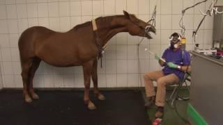 Tierklinik Gessertshausen - Zahnstation für Pferde
