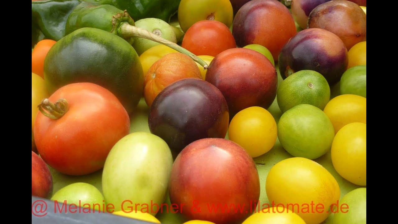 6 tomaten nachreifen lassen umgang mit gr nen tomatenfr chten youtube. Black Bedroom Furniture Sets. Home Design Ideas