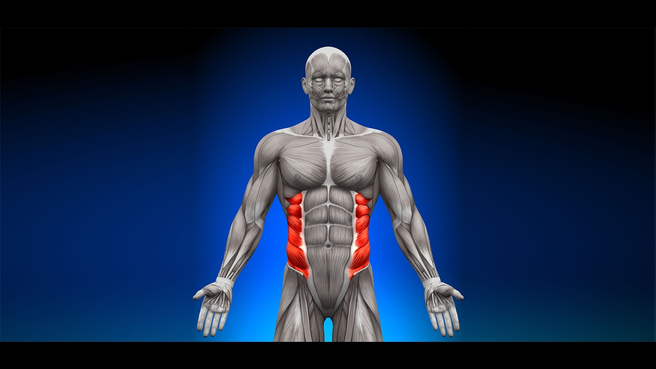 How To Work Your Internal And External Obliques How To Work Your