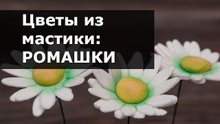 Цветы из мастики - Ромашка. Пошаговый мастер-класс лепки ромашки из мастики(В этом видео я покажу как можно легко сделать цветок ромашки из мастики с помощью вырубки или плунжера...., 2016-03-05T06:32:33.000Z)