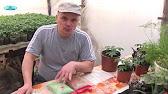 Центр здоровя в Сочи - Надежда Семенова - YouTube