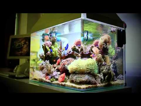 Bể cá cảnh biển nano