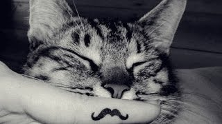 Отрезать коту усы......что если