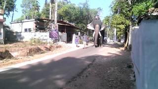 thrikkadavoor shivaraju (puthuchira)