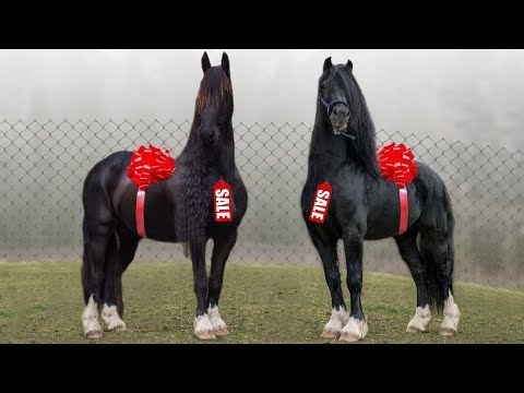 These Are 10 Most Expensive Horse Breeds