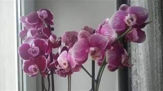 Как растут и цветут Орхидеи и др цветы в марте