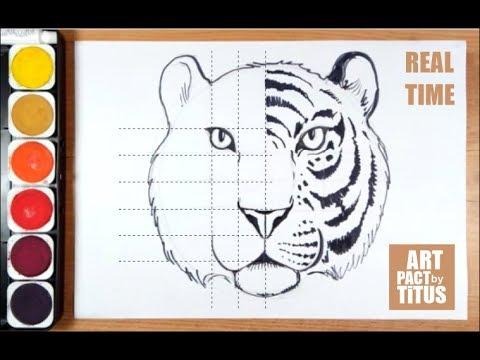 Cum Sa Desenezi Un Tigru How To Draw A Tiger Step By Step