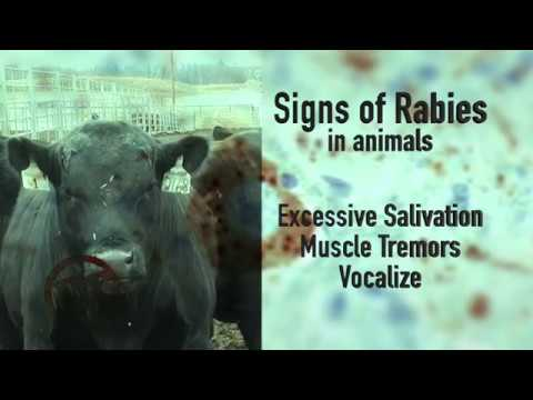 DocTalk Ep 300 01222018 Rabies in Cattle