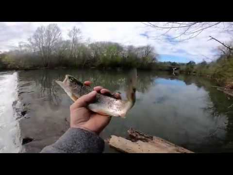Trout Fishing Stones River At Nice Mill Dam