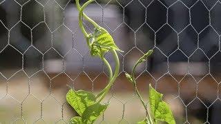 Soporte para plantas trepadoras - Bricomanía