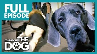 Download The Great Dane 'Villian': Dylan | Full Episode | It's Me or the Dog Mp3 and Videos