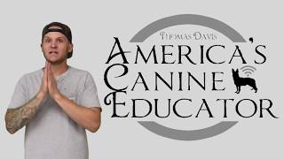 Pit Bull trained in minutes in this prong collar training video- America's Canine Educator-