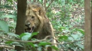 Wild Animals of Africa-Ngorongoro Crater-Tanzania