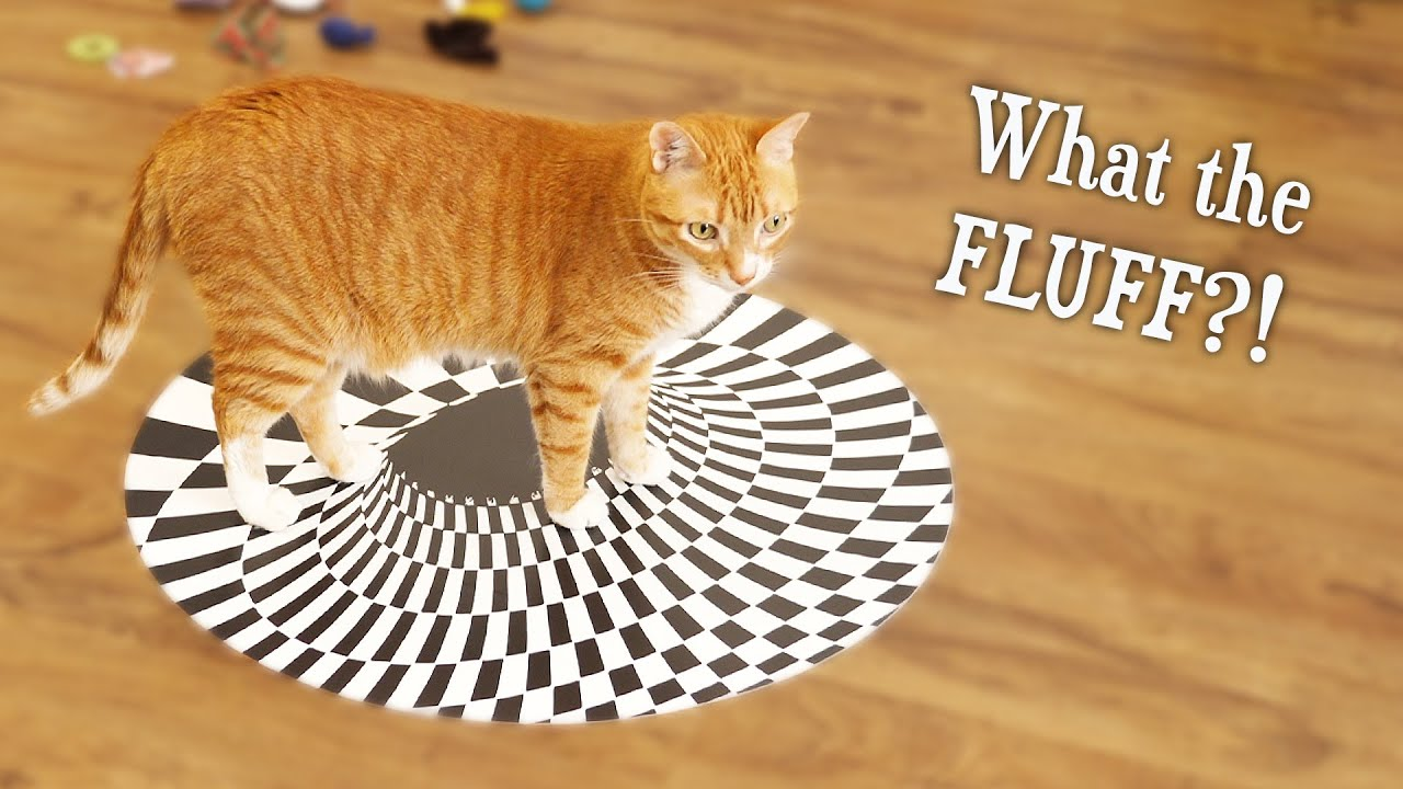 Can Cats See Optical Illusions? (Indoor Sinkhole)