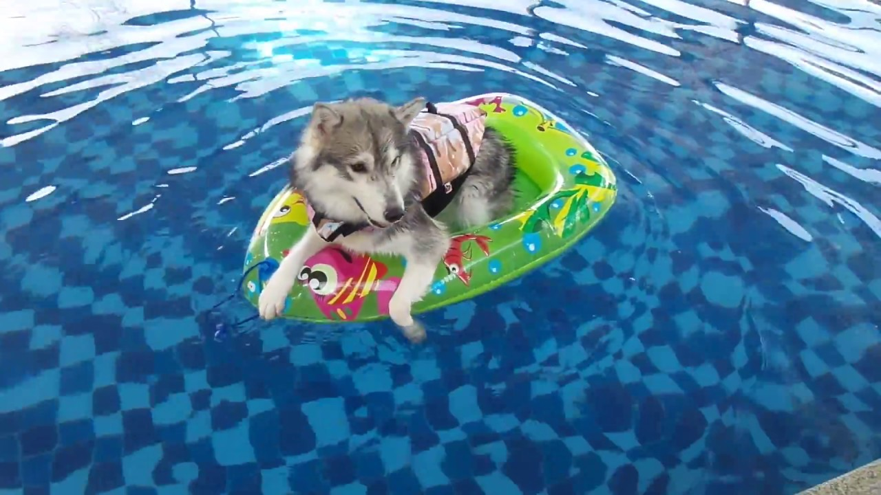 7 Ways To Pamper Your Husky