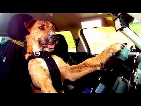 Smart Dogs doing Tricks #11
