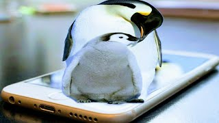 How to make penguin 3d image in PicsArt