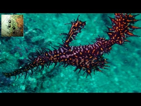 INCREDIBLE CREATURES AT STRAIT OF LEMBEH (Sulawesi, Indonesia)