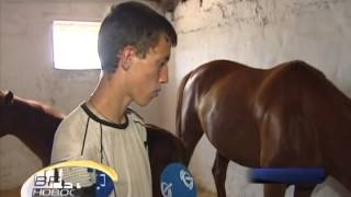ТК Донбасс - Единственный в Украине приют для лошадей