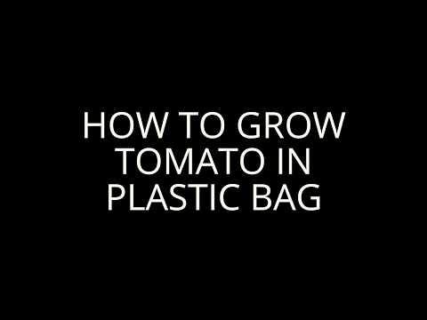 Grow Tomato easily  in plastic bag Kolkata  India
