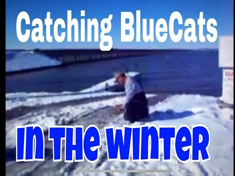Catching Blue Catfish in the cold winter months