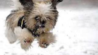 雪の中で楽しそうにしているワンちゃんたちの画像集です^^ 犬と雪 画...