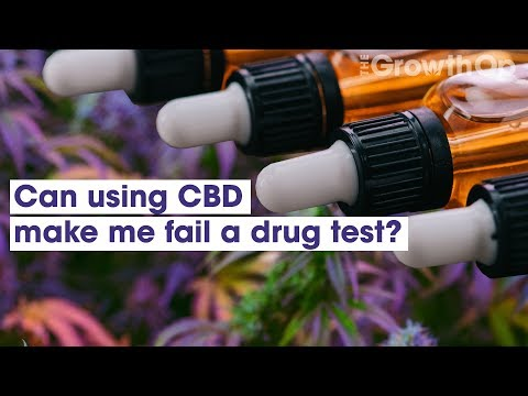 Can using CBD make me fail a drug test? | Weed Easy - YouTube