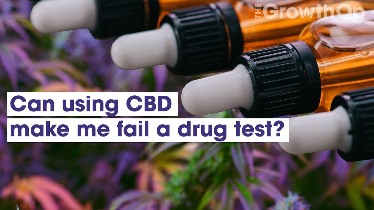 Can using CBD make me fail a drug test? | Weed Easy