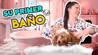 PRIMER BAÑO DE MARIE! 🐶👑 | COMO BAÑAR A TU MASCOTA | Camila Guiribitey