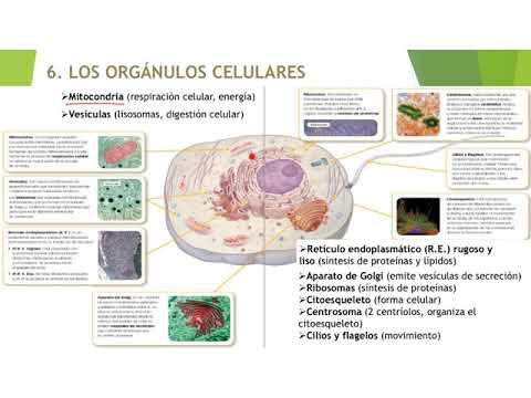 biología-y-geología-3º-eso.-ud.-1.-la-organización-del-cuerpo-humano.-colegio-peñafort.