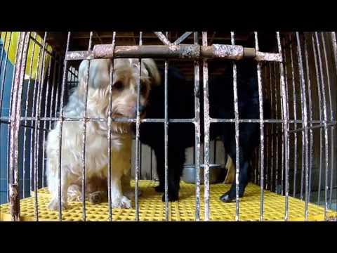 Dog Prison Break   Smart Dog