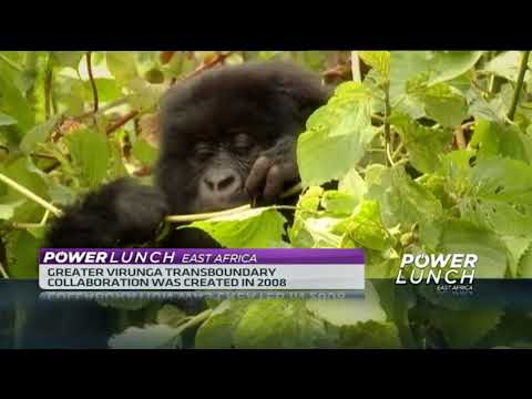 Uganda, Rwanda and DRC commit to protect endangered animals