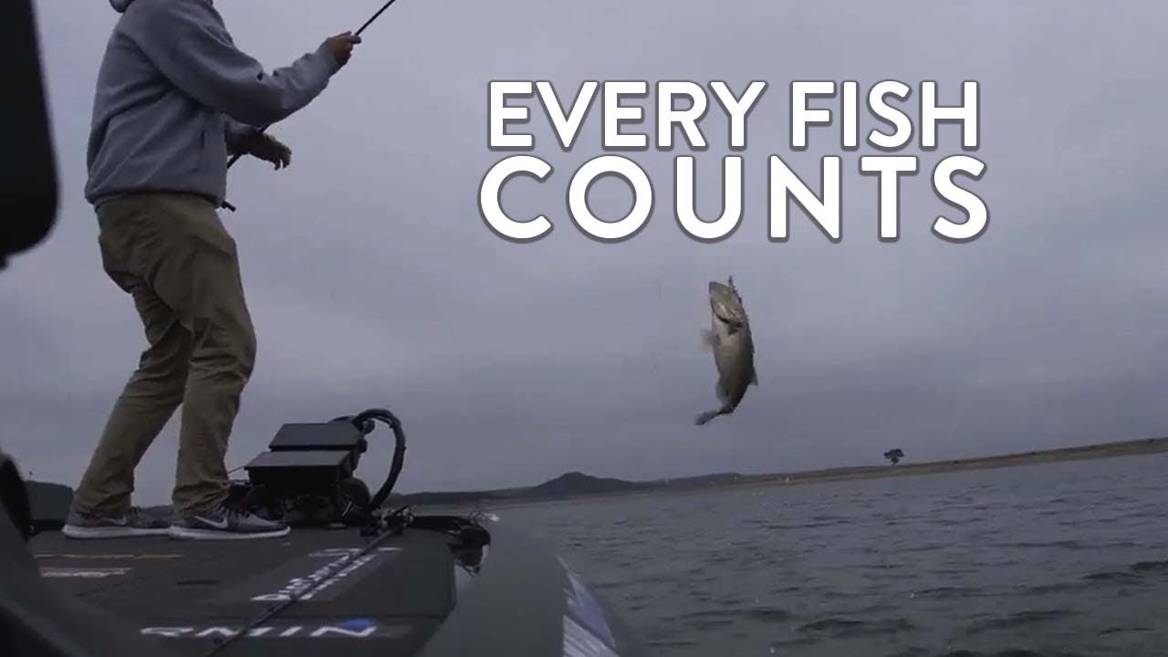 Every Fish Counts - YouTube