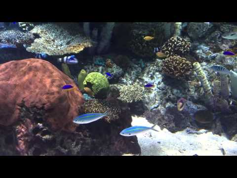Aquarium of Pacific 022 Tropical Pacific 23 April 2015