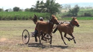 Horse Cart Race khadaklat.скачки.pacuan kuda.سباق الخيل. 赛马