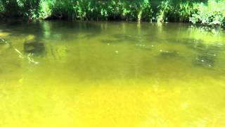 2013 Michigan Salmon Run