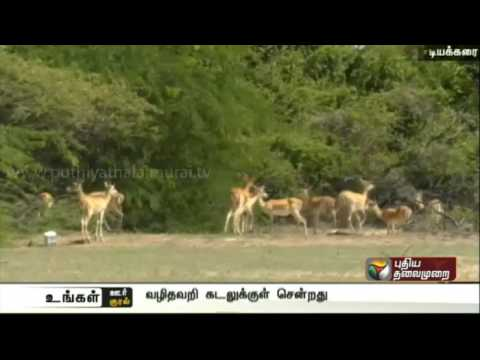Vedharanyam: Spotted deer falls into Kodiyakarai sea, dead