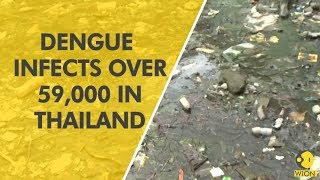 Dengue fever claims 69 lives in Thailand