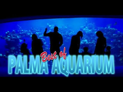 Best Of Palma Aquarium Mallorca 4K
